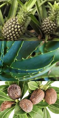 植物成分でマッサージ